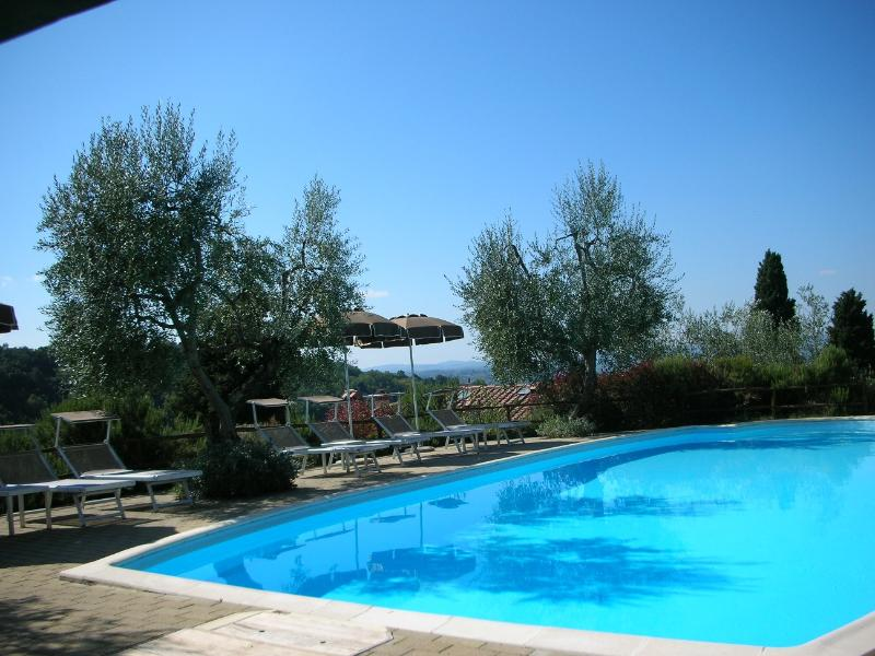 The swimming pool with olive trees
