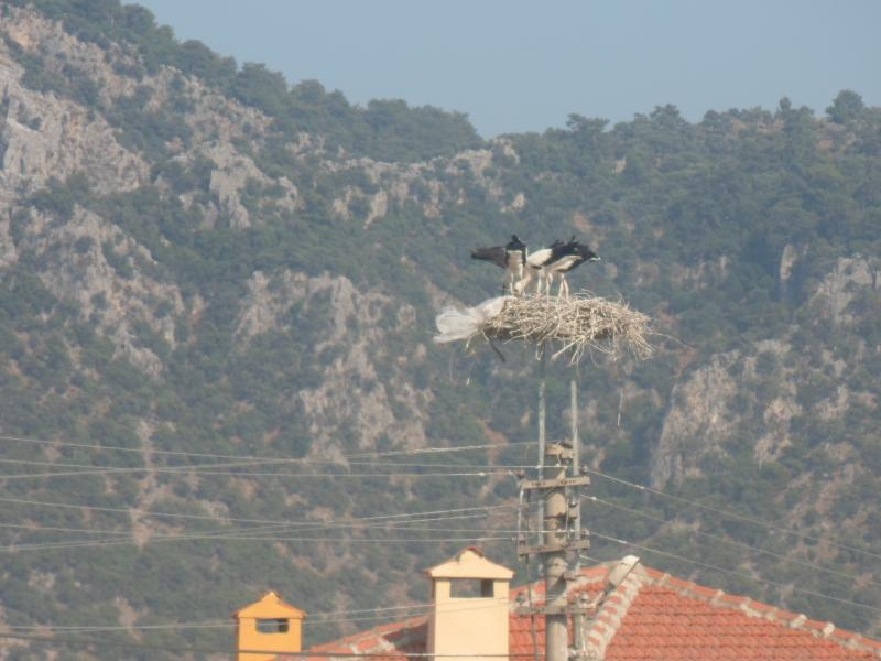 View of storks nest from front of villa