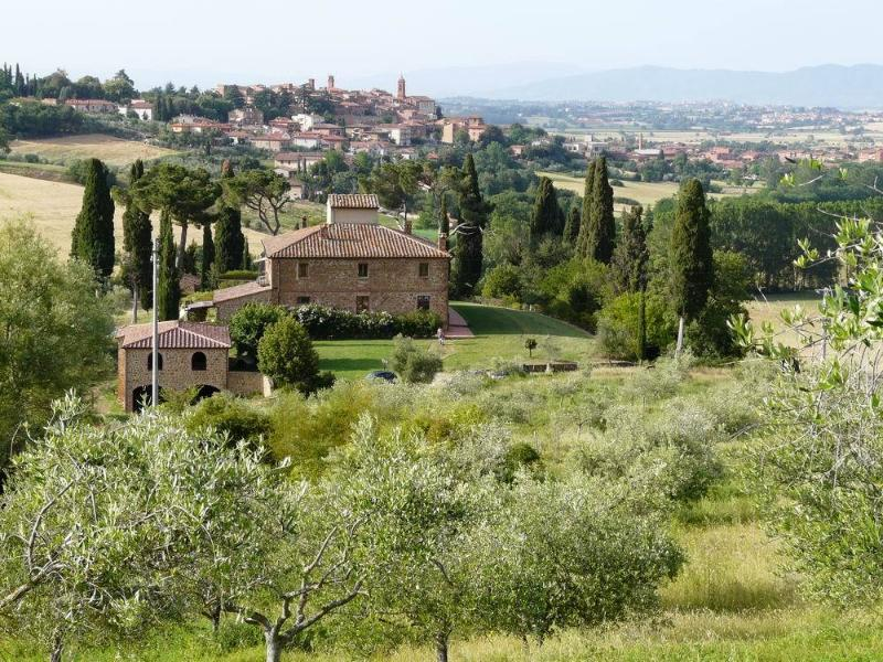 view from our olive grove