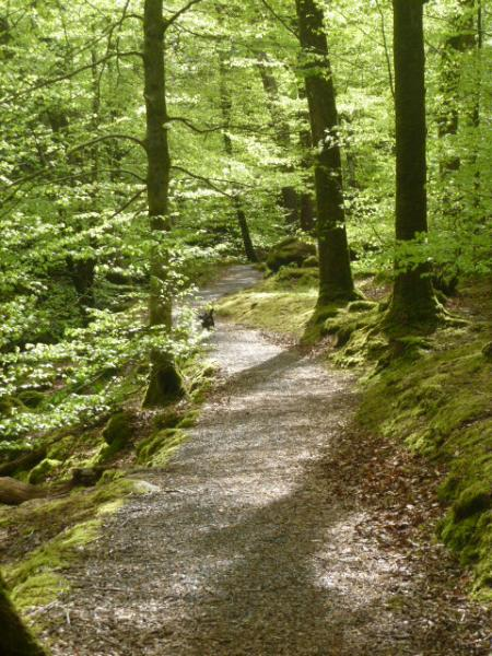 Torrent walk, accessible from the cottage