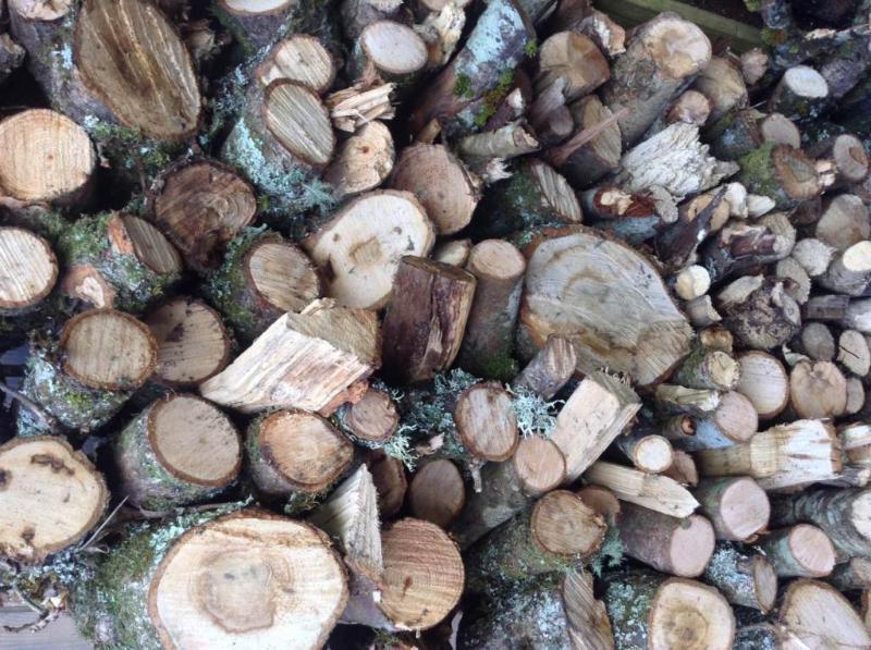 Plentiful Supply of Logs on Deck