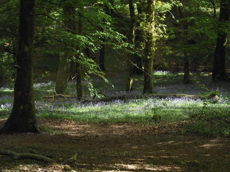 Spring in the woodland