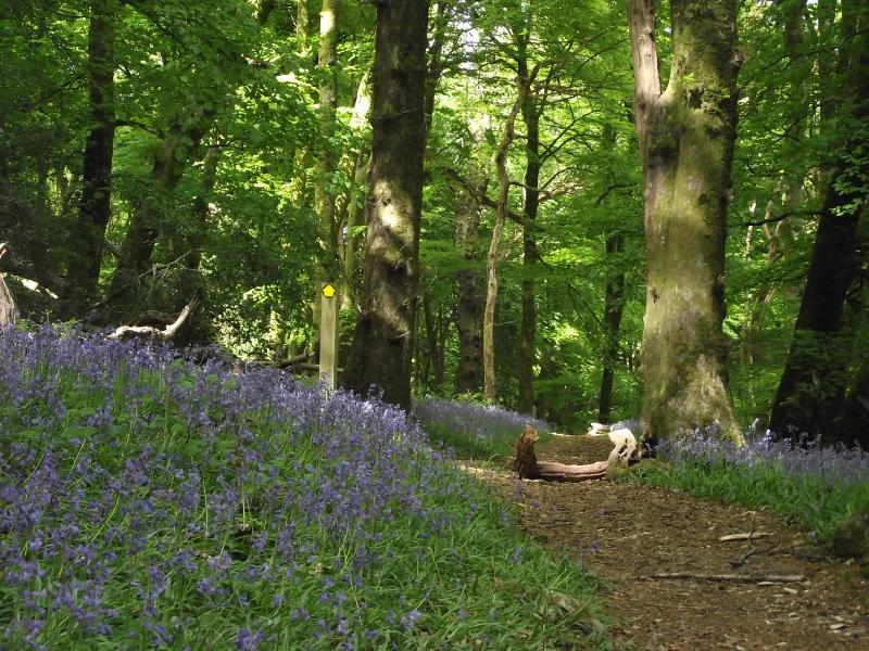 Spring in the Woodland.