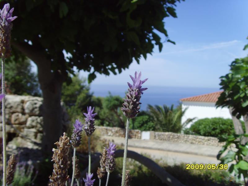 Beautiful terraces