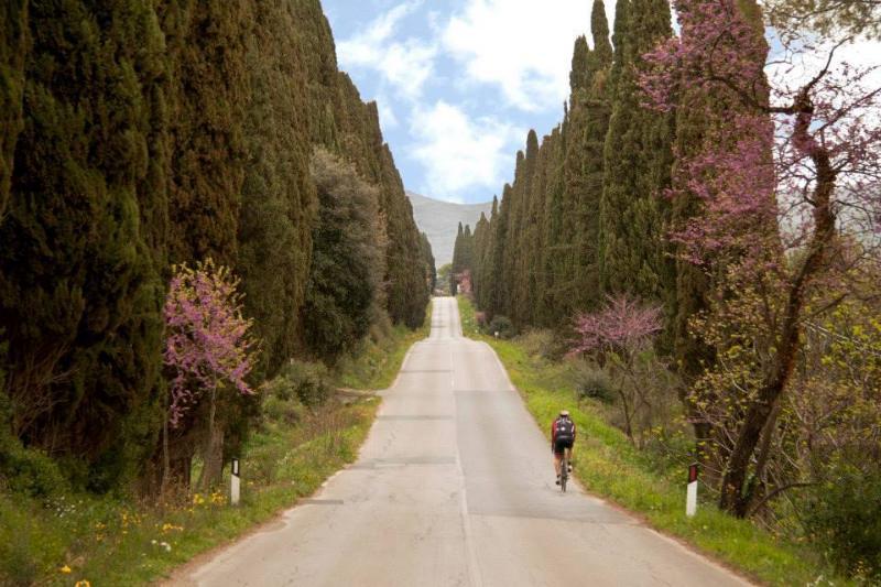 viale Bolgheri