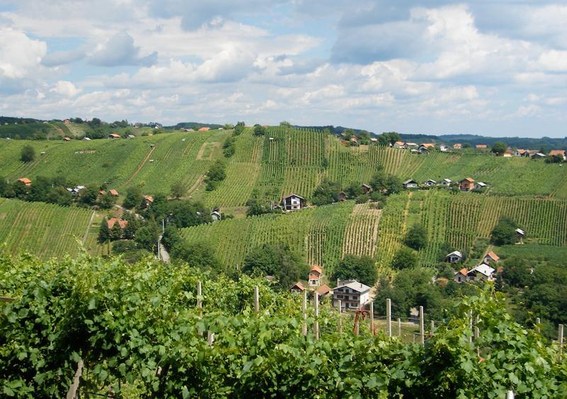Lendava vineyards on the Hungarian border