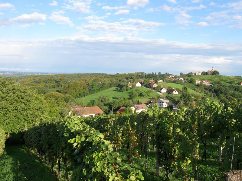 Kapela Radgonske Gorica vineyards