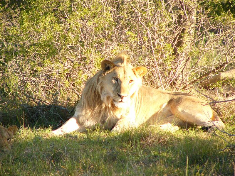 Game Reserves a short drive away