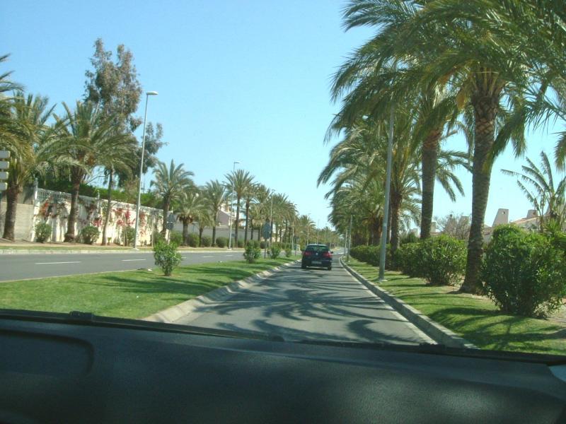 Tree Lined Roads of Almerimar