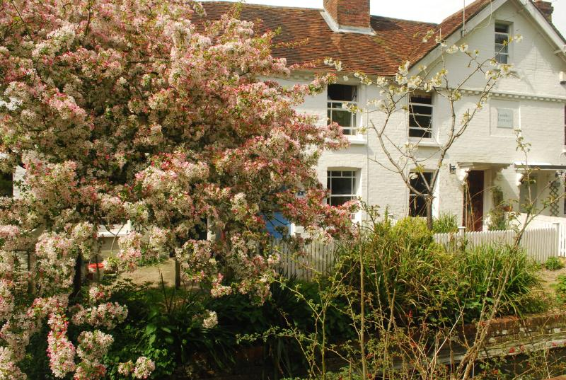 Terraced cottage with pretty spring blossom