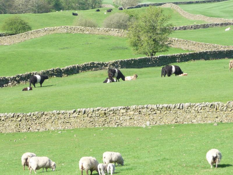 View across the farm