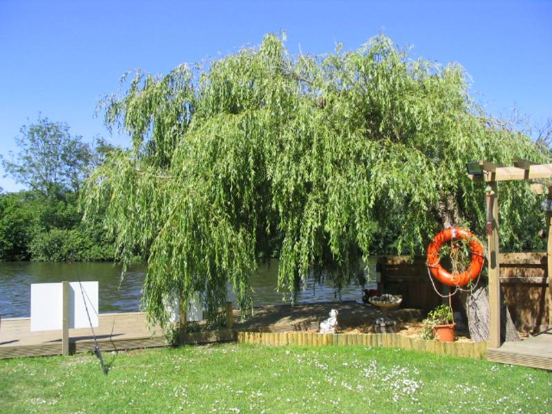 A lovely Willow Tree at The Willows