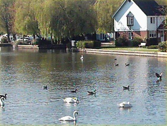 Wherry Cottage, waterside on river Bure, Wroxham, capital of The Norfolk Broads