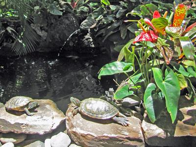 Stop by our tropical atrium ; check on our resident turtles