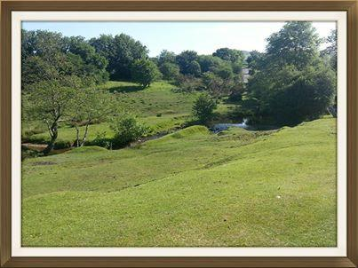 Local area nearby. Ideal for picnics. only 10 minute walk from the park