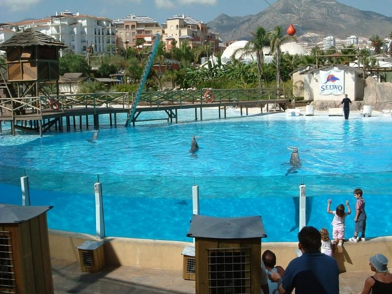Dolphin show at the new Selwo & Dolphinarium ,10 minutes walk from complex