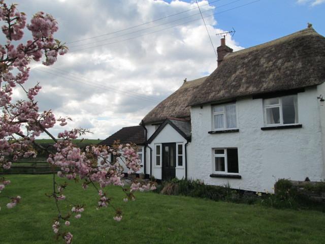 Hele Lane Cottage Easter 2014