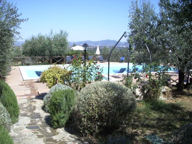 Pool set amongst the olives, roses and lavender