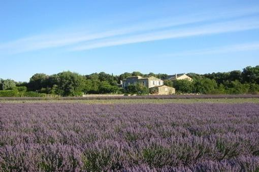 Font-Peyrins is lost in the middle of lavender fields and vineyards
