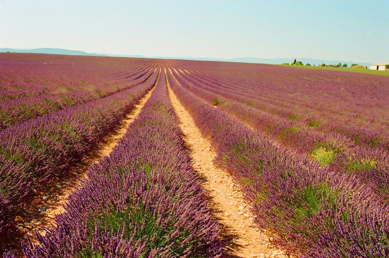 Valensole Plateau 1 hours drive away. Aix, Avignon, Arles, just 20-40mins.