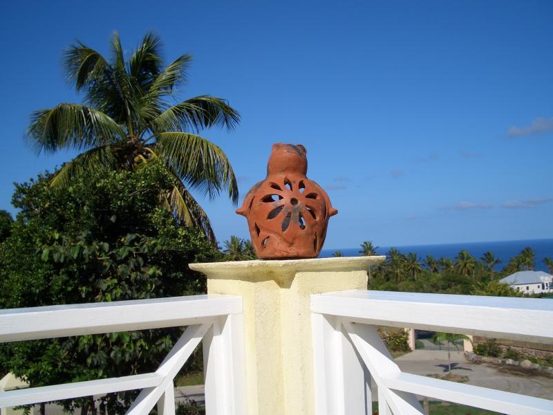 Tree frog overlooking pool deck