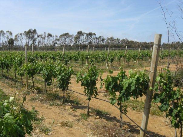 La tenuta viticola, 10 ettari di vigneti di qualità