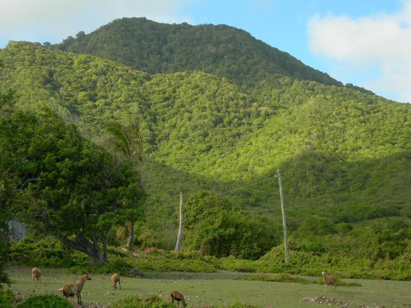 Mount Nevis from Fern Hill