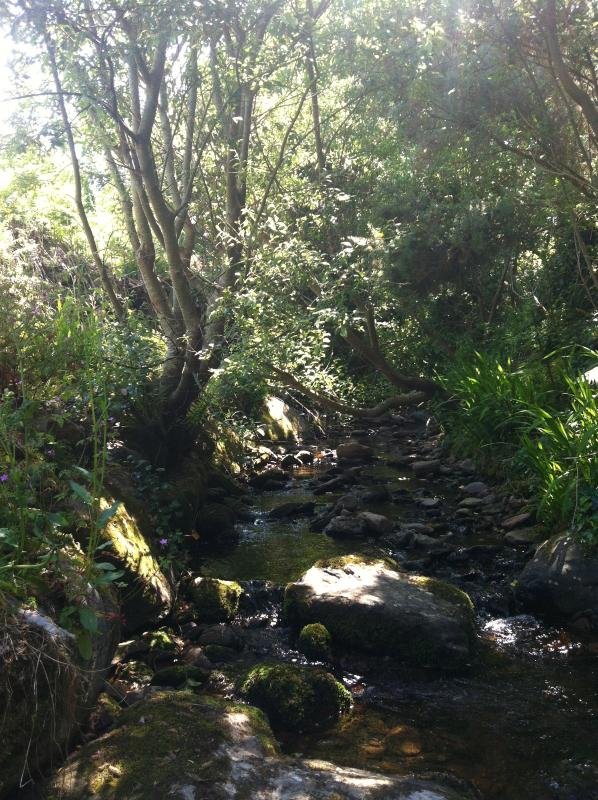 Your secluded stream in your Secret Garden