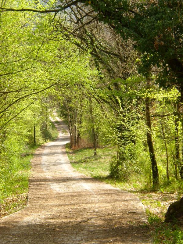 Driveway To The Villa