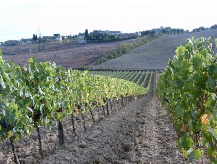 Agriturismo il Poderaccio App. Gaia, holiday rental in Isola d'Arbia