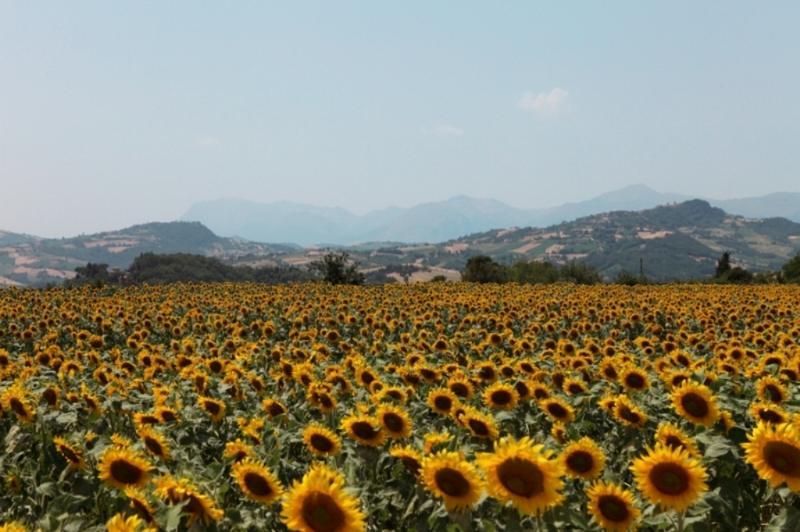 AGRITURISMO BONFIGLI, vacation rental in Loro Piceno