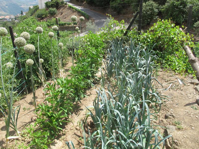 Horta para colher os seus legumes