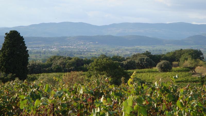 Vineyards surrounding Le Pouget