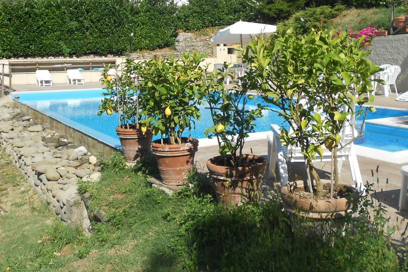 Swimming pool and lemon trees