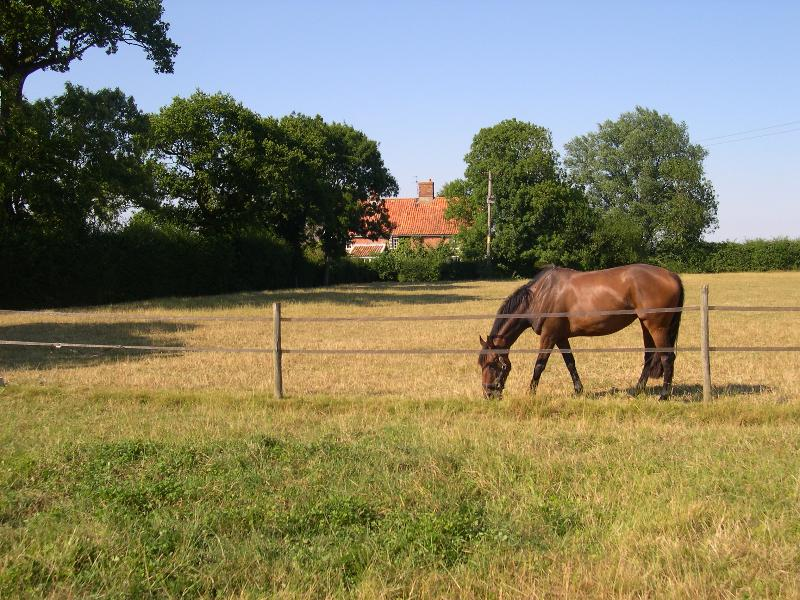 Watsons Farm from paddocks in front of the house