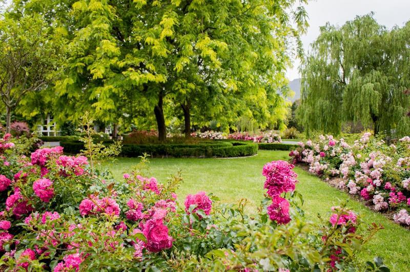 Hundreds of roses in bloom Nov to June