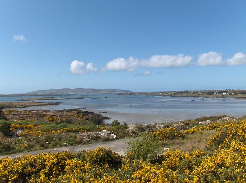 Dungloe Bay through the furse from the conservatory in May
