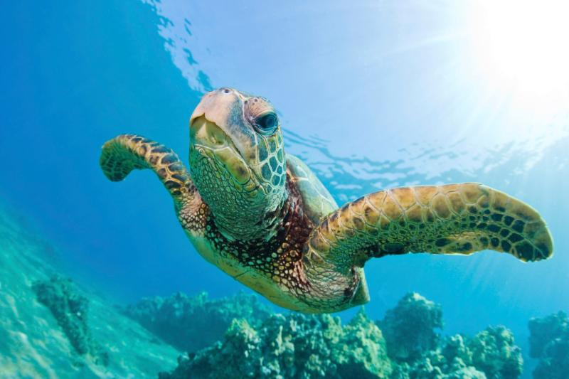 Swim with turtles from a catamaran or from the beach near Ju-Jus on Alleynes Bay.