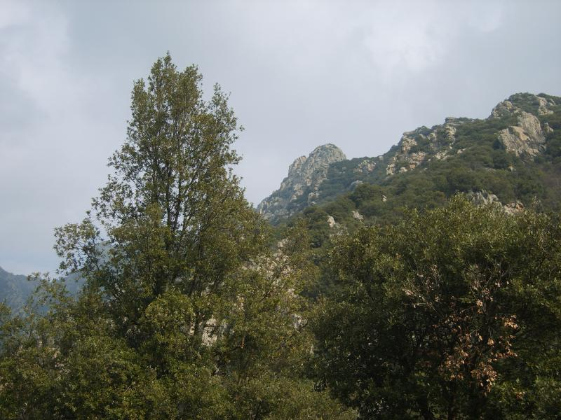 mountain veiw - if you enjoy walking I have a good selection of walks with fantastic scenery