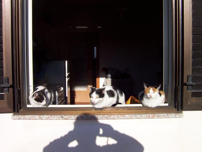 my four-legged friends