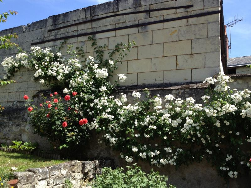 The lovely Wedding Day roses in front of the gite in late spring