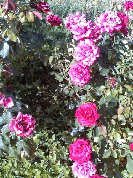 Saison de fleur