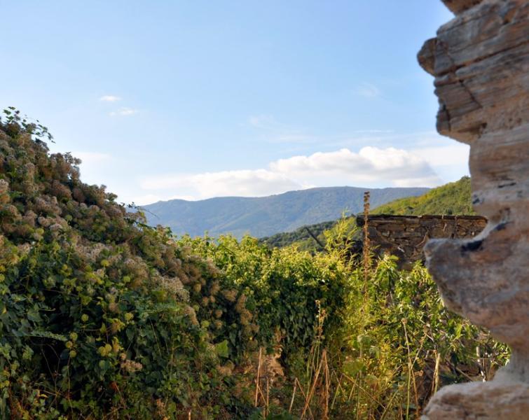 La casa se encuentra en el Parque Natural de Haut Languedoc