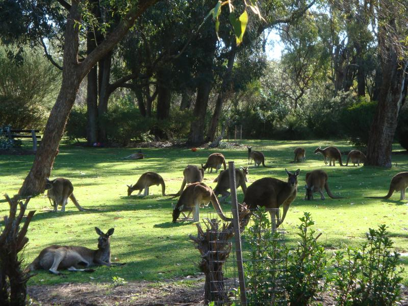 Pinnaroo Memorial Park o only 5 mins drive away