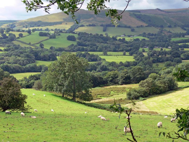 Local view - typical Carmarthenshire landscape