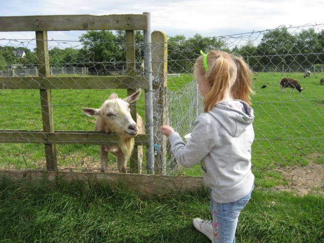 The pet farm area at NaturZoo Mervent is 15 minutes away, the favourite for the young children.