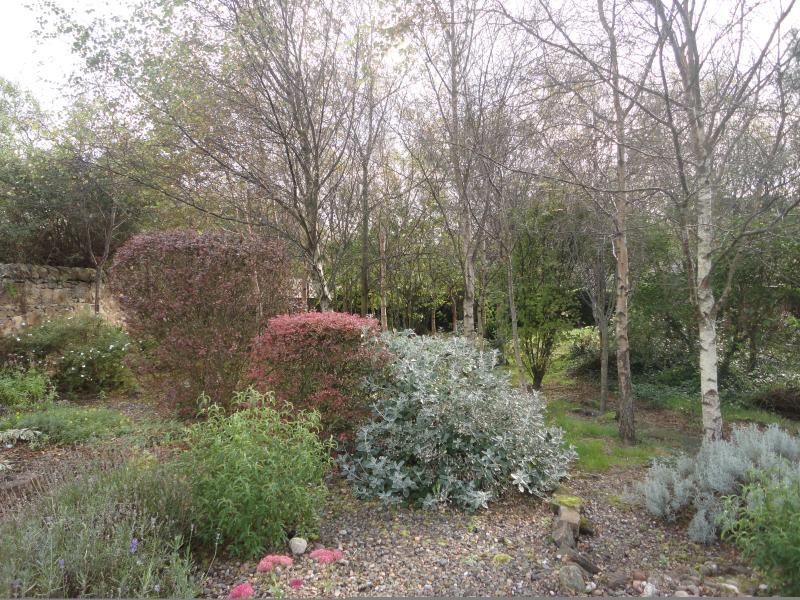 Woodland area of garden