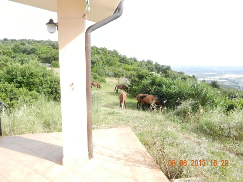 The patio of the villa with part of the land available (sometimes with grazing horses)