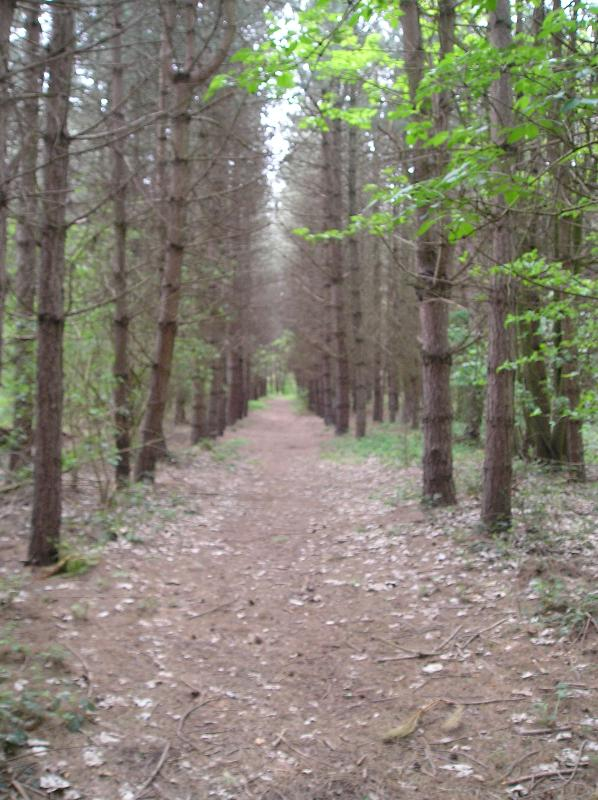Forest Avenue - we have 8 acres for you to explore.