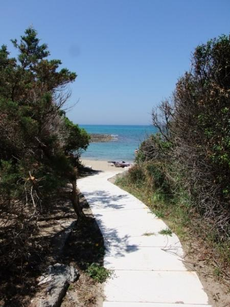 Pathway to the beach - through the pine forest